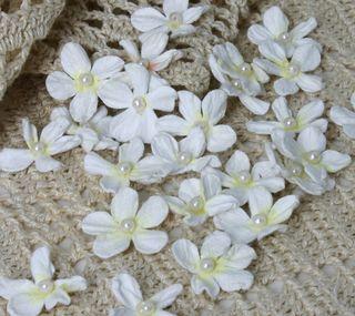 CMC pearl daisies