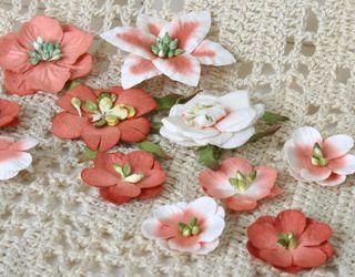 Paprika Penny Lane flowers
