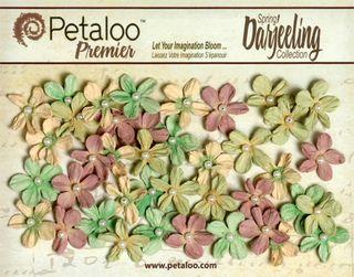 Mini Pearl Daisies