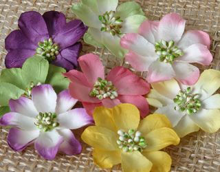 Mixed colors Foredinations flowers