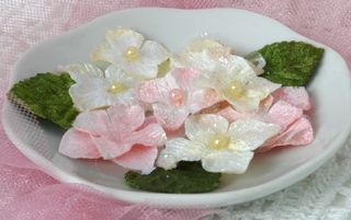 Pink white hydrangea