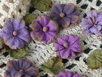 Petites purples