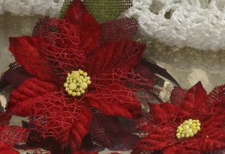 Close up  Pointsettia BEAUTY