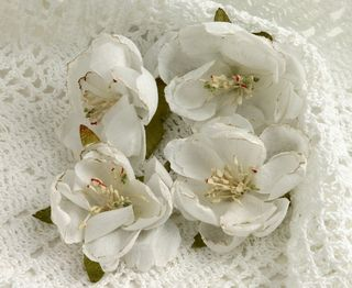 BEAUTY Blooms white smaller