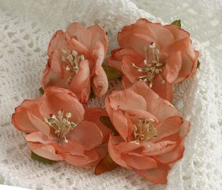 BEAUTY Blooms Coral smaller