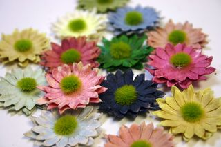 Mini Daisy mixed display