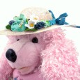 Straw hat, Petaloo flowers, Maggi Harding (1)