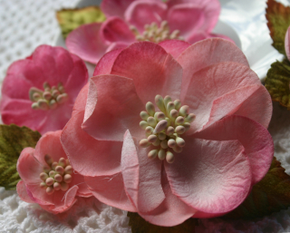Magnolia Mix x 5 pink