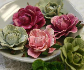 Garden Roses green - pink